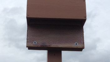 how to make your own bat box and keep insects away