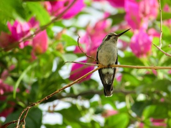 Von den Kolibris waren wir im Jardin de Balata besonders begeistert - der Baumwipfelweg hielt uns fit auf Martinique