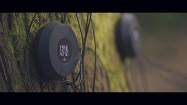 IL PROGETTO TRACE Il canto degli alberi per salvare il Pianeta (1)