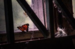francesca-dani-Ho-guardato-negli-occhi-i-fantasmi-di-Chernobyl-the-mag-43ILMONDOLAFUORI12