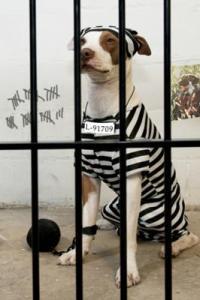 The Jail Break Artist - jailed prisoner costume
