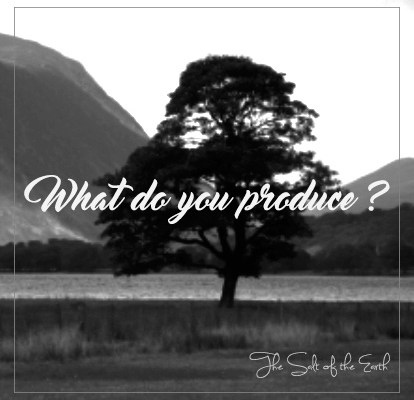 What do you produce? Tree of life