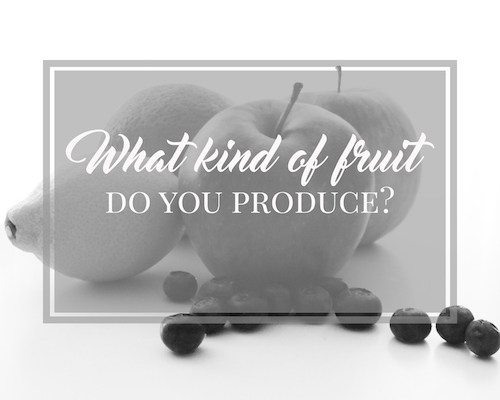 What kind of fruit do you produce
