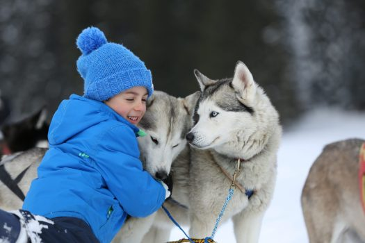 Dog-sledding is an activity to do at Alpe Cimbra and good for all the family - Photo by: Azienda per il Turismo Folgaria Lavarone Lusérn