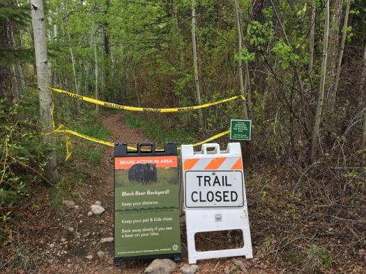 Aggressive bear bites hiker near Aspen; victim OK. Photo: Aspen Daily News.