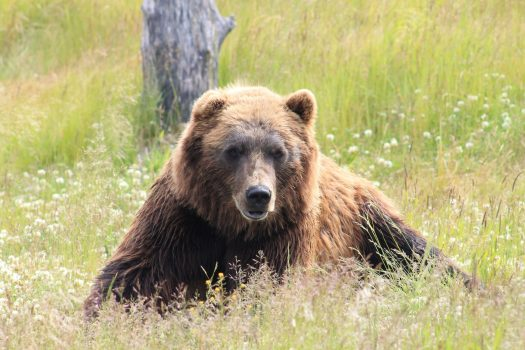 Aggressive bear bites hiker near Aspen; victim OK. Photo: Elizabeth Meyers. Unsplash.