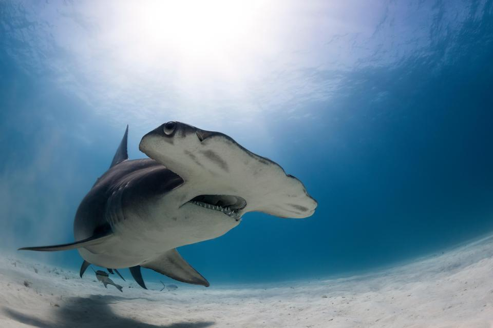 The sharks didn't last too long around the people and eventually swam away