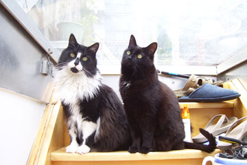 Toronto Wildlife Centre - Two Cats