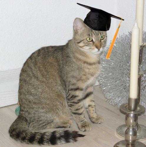 Jasper Graduation Cap