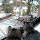 Jasper & Linus: Stosslüften