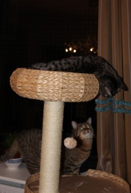 the3cats_2013_02_13_9656