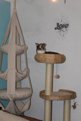 the3cats_2013_02_13_9674