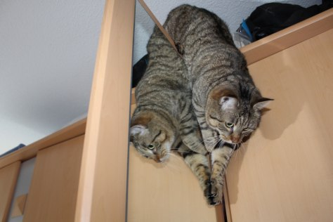 the3cats_2013_03_02_0715