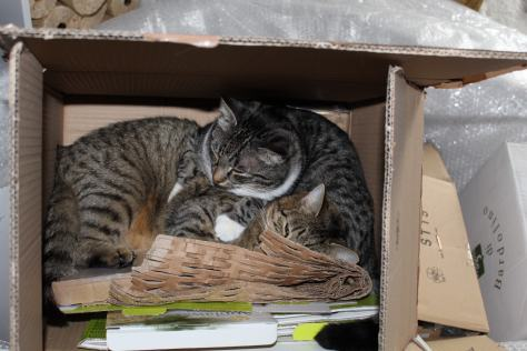 the3cats_2013_03_10_1247