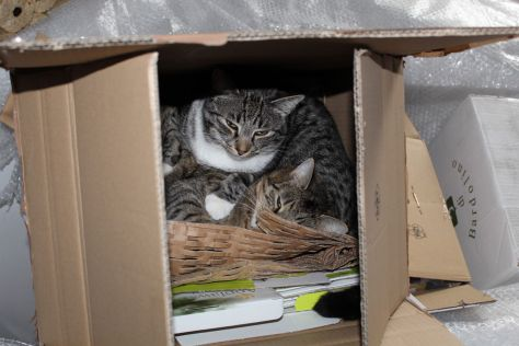 the3cats_2013_03_10_1257