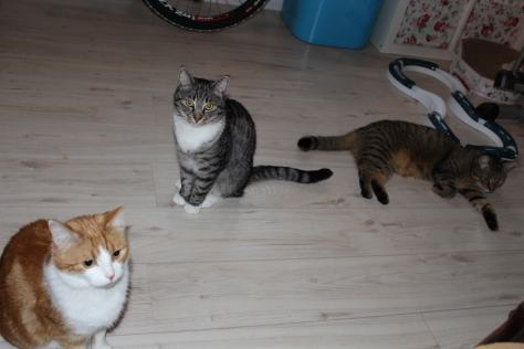 the3cats_2013_04_13_2580