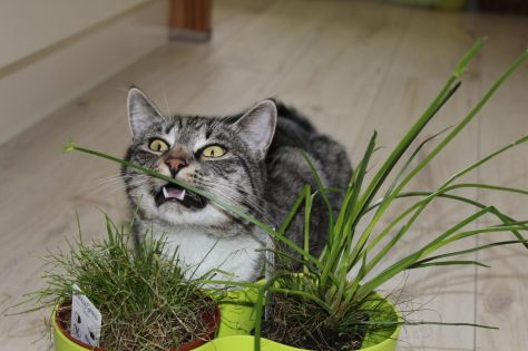 _the3cats_2013_05_27_7967