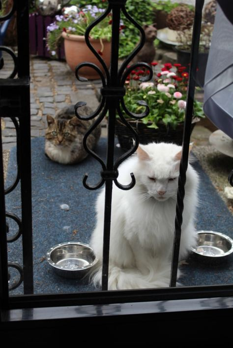 _the3cats_2013_06_03_8460