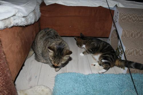 _the3cats_2013_10_31_9245