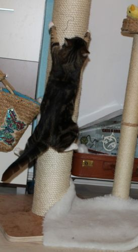 _the3cats_2013_11_29_2568