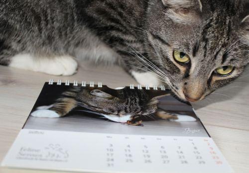 Linus: Jinpa ist 'Mister März' im Behindicatkalender *petz* (& noch Kalender übrig!)