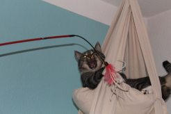 _the3cats_2014_01_12_8802