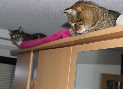 _the3cats_2014_01_22_9680