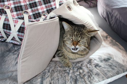 _the3cats_2014_03_13_1725