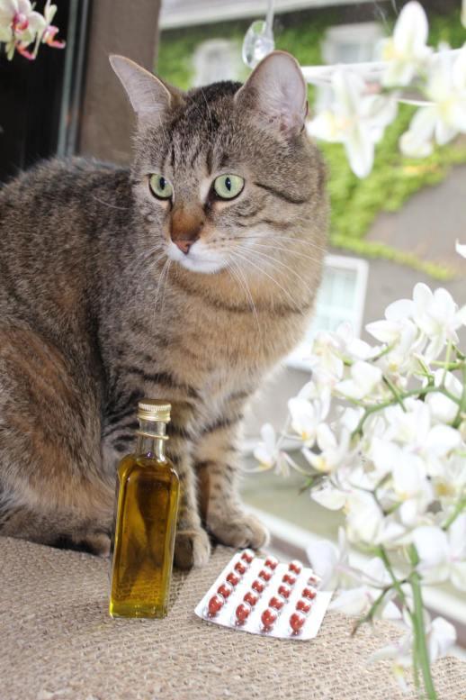 Jasper: Schwarzkümmelöl gegen Zecken? Gilt das auch für uns Katzen?