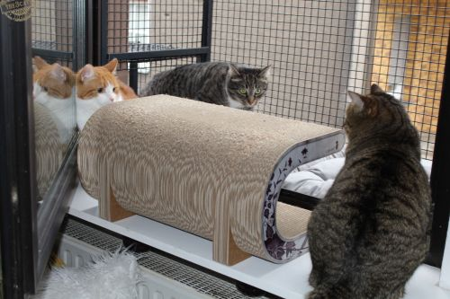 _the3cats_2015_03_19_1192