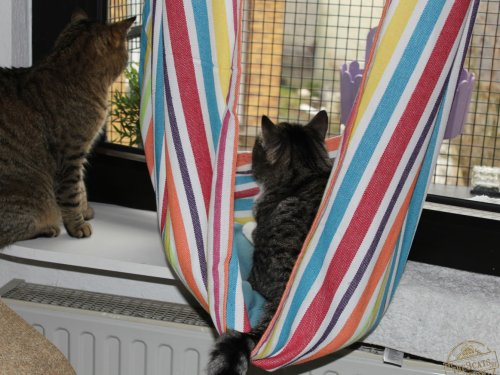 _the3cats_2015_03_27_1845