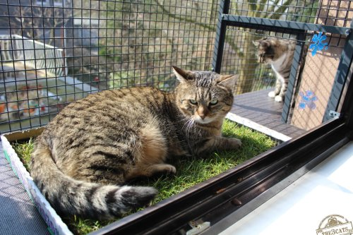_the3cats_2015_03_28_2339