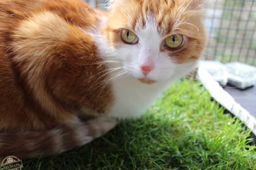 _the3cats_2015_04_03_3074