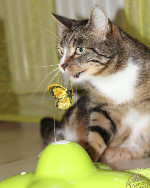 _the3cats_2015_04_06_3534