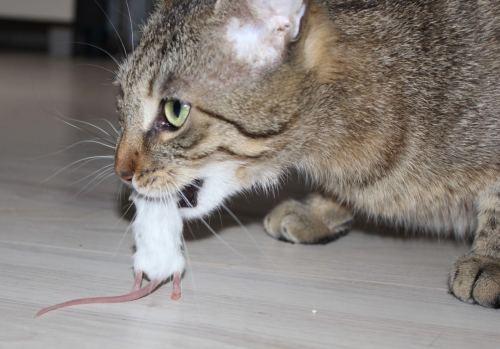 Jasper: Der schnelle Einstieg ins Katzen BARFen: Das Vollsupplement