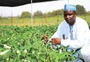 Cowpea developed by IAR-ABU Zaria scientists to be released commercially