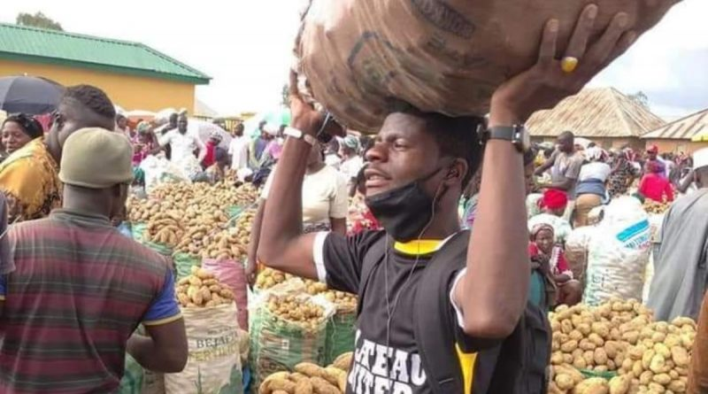 Meet Faruq Mai Dankali, the Young ABU graduate who is a 'Potatoe-preneur' in Jos 4