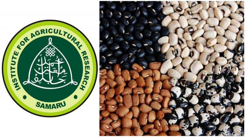 IAR/ABU, AATF begin nationwide on-farm demonstrations of PBR cowpea 5