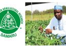 New ABU developed cowpea variety shows promises in demo farms