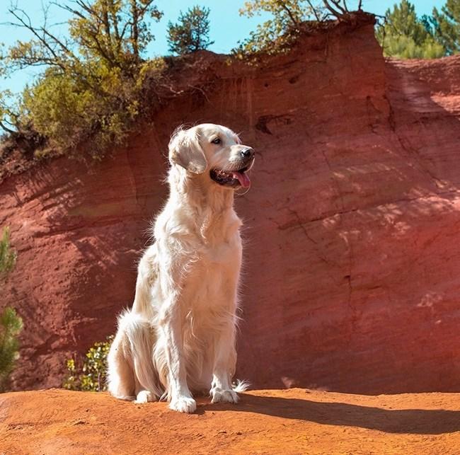 Colorado Provençal avec son chien