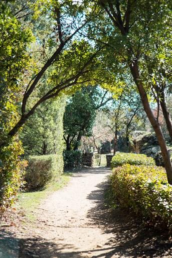 Cani-rando Pont du Gard