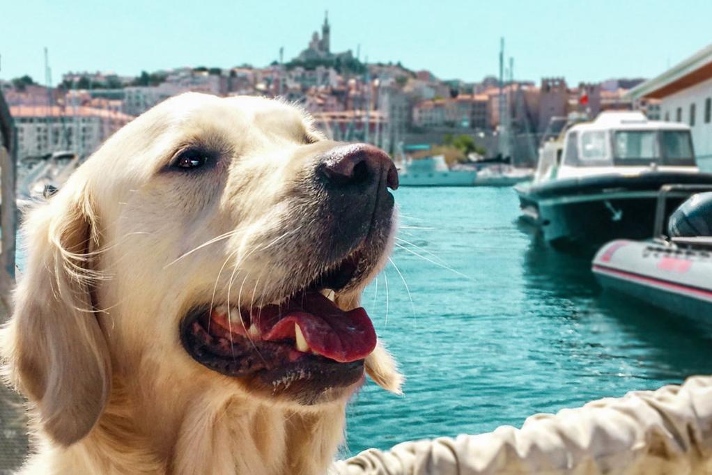 Marseille-avec-son-chien-1
