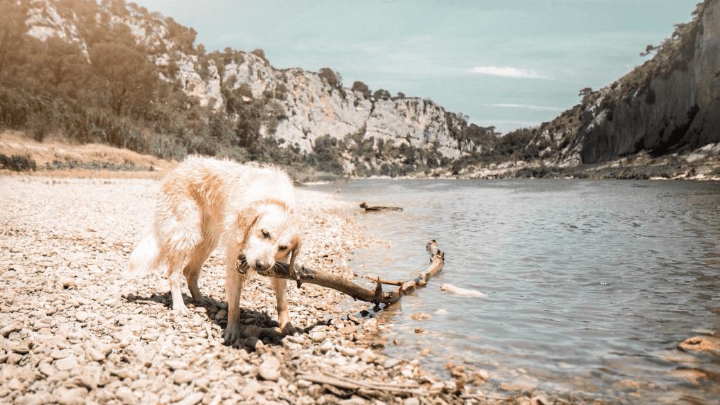 Les gorges du Gardon avec son chien