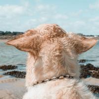 Diy Collier porte Médaille pour chien