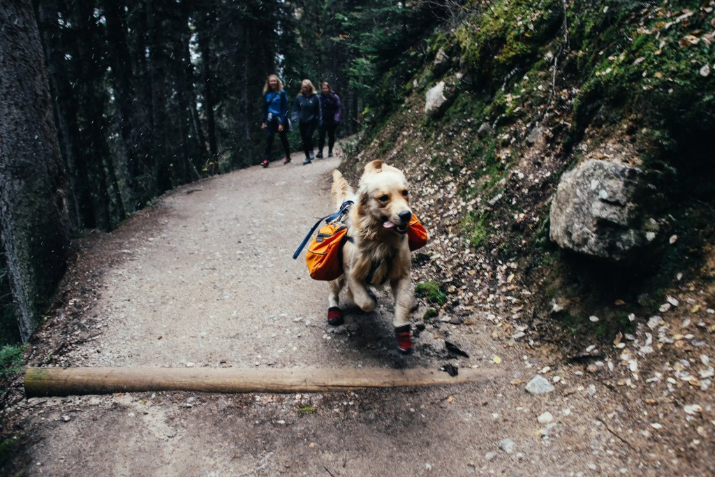 Hiking dog with right hiking gear with backpack