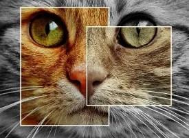 grieving cat death