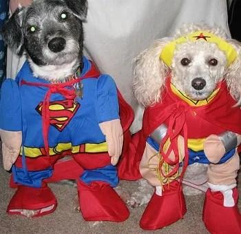 dog anxiety halloween