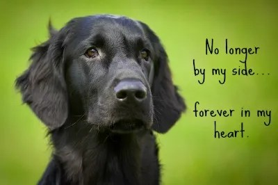 How Do I Live Without My Dog?