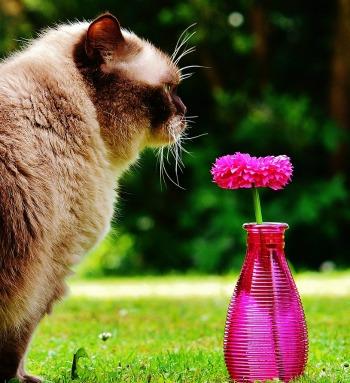 blossom like a cat sheblossoms blog