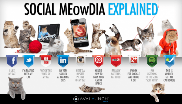 cats-explain-social-media-Social Media and Professionals in the Aging Industry